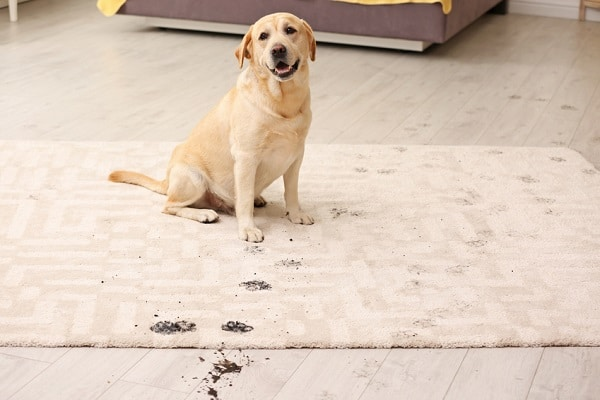 8954a4824bd4 5 Best Dog Doormats (That Really Work) - Great Dog Zone
